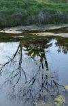 Le devenir de l'eau pendant la photosynthèse. Une féconde régénération