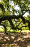 « Commence par lâcher la branche ! » (Billet du jeudi 23 avril 2020)